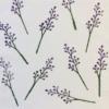 Block Printed Fabric- Botanical Design